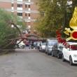 Maltempo Roma, albero crolla a ingresso scuola. Pino marittimo su auto a Talenti 2