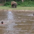 Elefantino salva ranger che fa finta di annegare 4