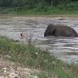Elefantino salva ranger che fa finta di annegare 2