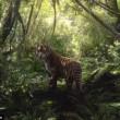 Tigre ferita sul letto di casa: spot commovente Wwf 2