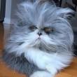 Cane o gatto? Virale su Twitter la FOTO dell'animale misterioso 4