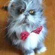 Cane o gatto? Virale su Twitter la FOTO dell'animale misterioso 2