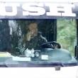 """YOUTUBE Travolge col tir intera famiglia: guidava col cellulare. Daily Mail: """"In tanti guidano col telefonino"""" FOTO"""
