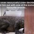 Indonesia, lucertola lunga 3 metri nel bagno dell'albergo7