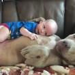 YOUTUBE-FOTO Bulldog americano accudisce e lecca neonato 2