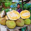 Jackfruit, il frutto che sfamerà il mondo01
