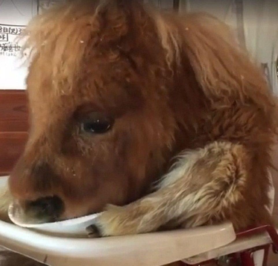 Pony mangia le carote sul seggiolone3
