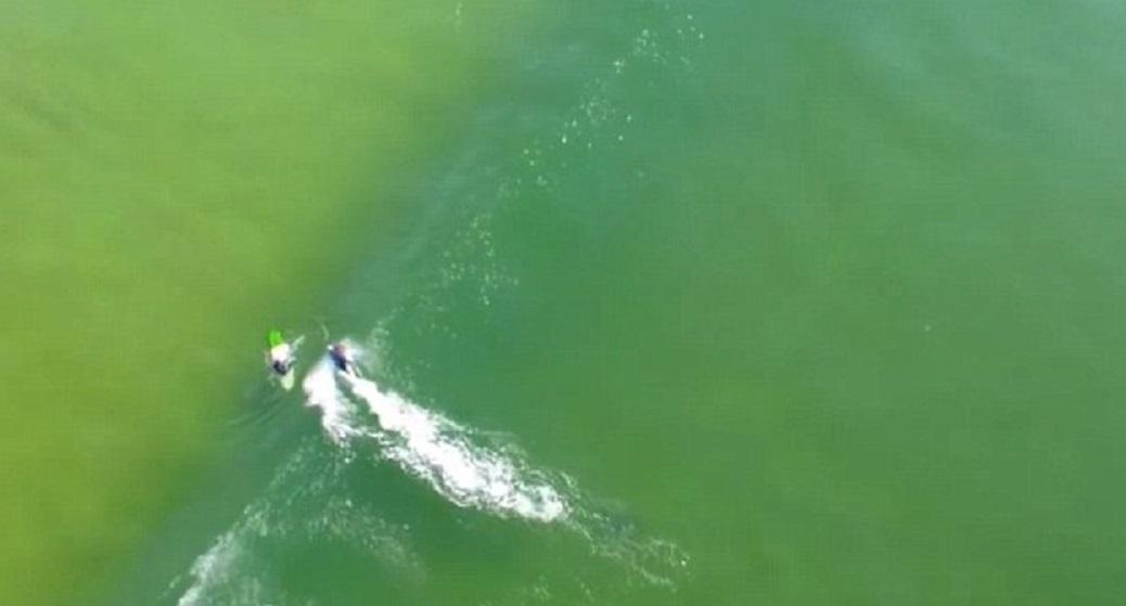 Squalo si avvicina pericolosamente a surfista VIDEO drone6