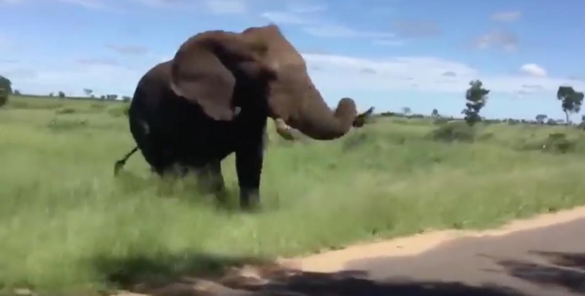 YOUTUBE Turisti infastidiscono elefante al safari: lui li attacca