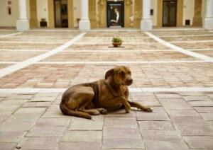 Pilota morto in casa: il suo cane l'ha vegliato e continua ad aspettarlo