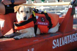 Francavilla al Mare, si tuffa nel mare in tempesta: salvato dai cani bagnino