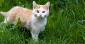 Bitonro (Bari), licenziata per aver aiutato un gattino randagio durante il turno di lavoro