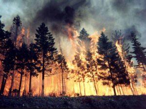 """Incendi, arrestati 4 ragazzi nel Viterbese. Si giustificano: """"Una bravata"""""""