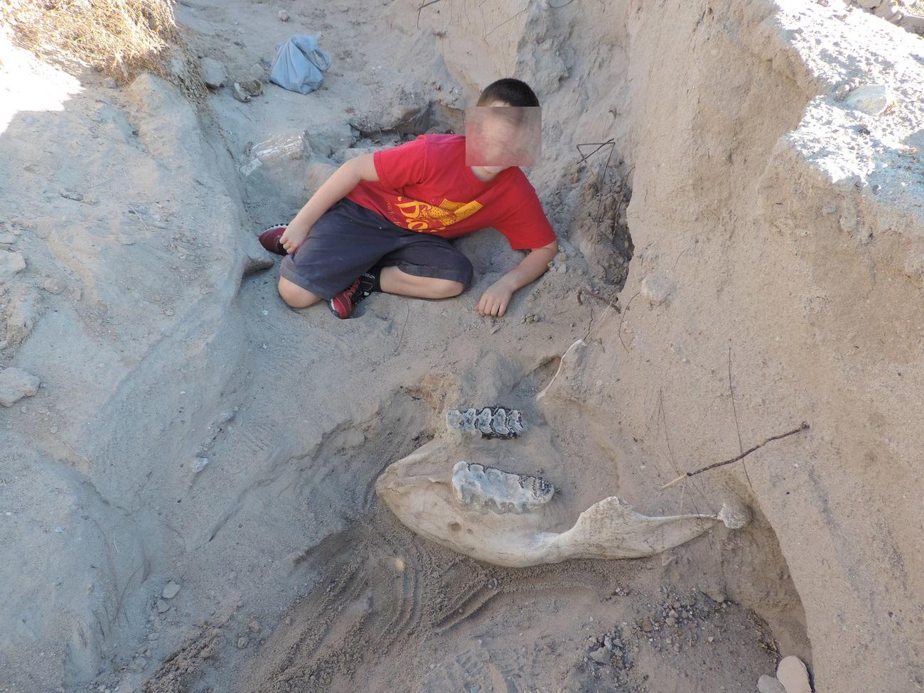 Nuovo Messico, fossile di un milione di anni fa scoperto per caso da bimbo di 9 anni