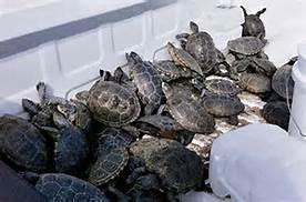 Le tartarughe all'aeroporto Kennedy