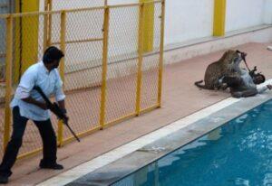 India, elefanti e tigri uccidono una persona al giorno. Ma anche l'uomo...