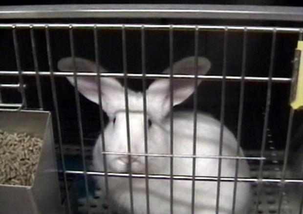 Sperimentazione sugli animali ancora oggi: le aziende insospettabili che la fanno