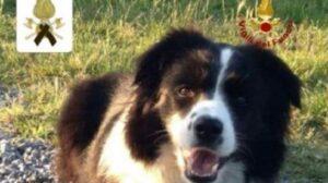 Camilla morta cercando un disperso, Amatrice dedica una statua al cane-eroe