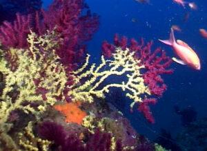 Maldive. Torna con i coralli in valigia: 5mila euro di multa