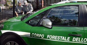 Corpo Forestale e Carabinieri, accorpamento da rivedere: decide la Corte Costituzionale. La sentenza del Tar Abruzzo