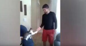 Gatto ogni mattina dà il cinque al suo padrone