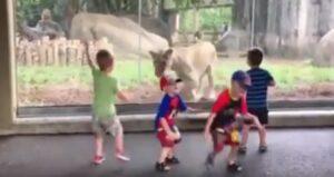 Bambini allo zoo urlano terrorizzati davanti al vetro della leonessa