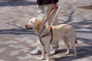 """Martino Pianti, cieco, cacciato da 2 negozi a Oristano. """"I cani non possono entrare"""""""