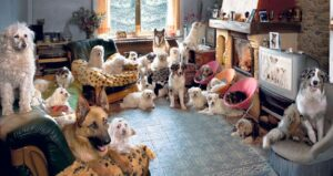 Vive con 20 cani in casa, arrivano i vigili: multa di 300€. Il massimo è 10