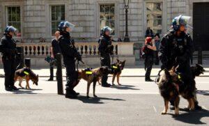 Gran Bretagna, per Islam cane è impuro: tute speciali alle carcerate musulmane durante le perquisizioni