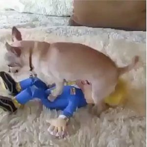 Lewis Hamilton, cane si accoppia con pupazzo di Trump: rischio squalifica per questo post