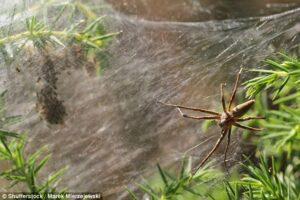 Pensavano fosse brina e invece era una gigantesca ragnatela: l'incubo di una famiglia australiana