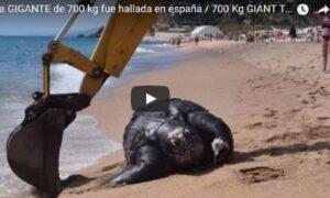 YOUTUBE Barcellona, in spiaggia trovata una tartaruga gigante di 700 kg