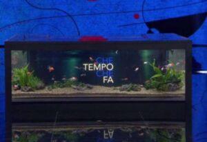 Fabio Fazio fa infuriare anche i vegani: colpa del tavolo-acquario con i pesci prigionieri