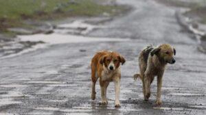 Cani randagi raddoppiati in due anni: veterinari chiedono sterilizzazione