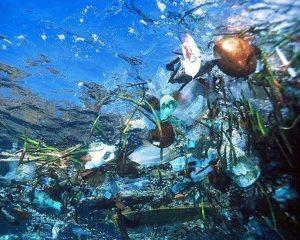 Pesci-pacifico-mangiano-plastica