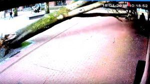albero-cade-passeggino