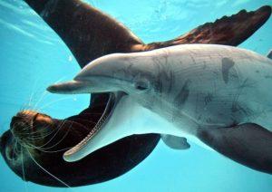 delfinario-nuoto-ansa-foto