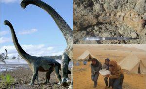 Trovati i resti di un nuovo dinosauro