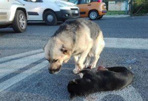 Vercelli: sette cagnolini chiusi in valigia, 2 uomini denunciati per maltrattamenti