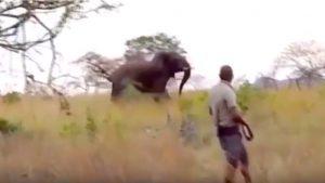 Elefante carica: terrore durante il safari, la guida riesce ad allontanarlo