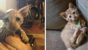 gattino salvato zeus