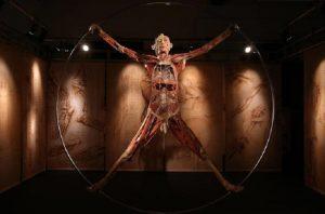 "La mostra ""Real Bodies"" (foto Ansa)"
