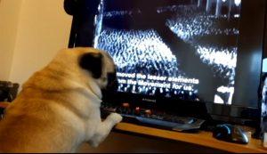 Buddah guarda la tv