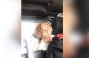 """Carabinieri """"arrestano"""" un cane: """"Tranquillo, una settimana e sei fuori"""""""