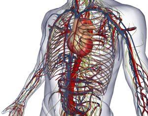 """Nel corpo umano un nuovo organo: si chiama """"interstizio"""""""