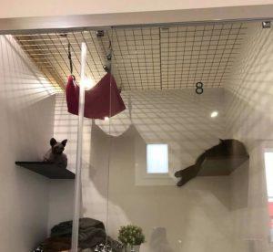 Dove lasciare i gatti quando si parte? La risposta francese