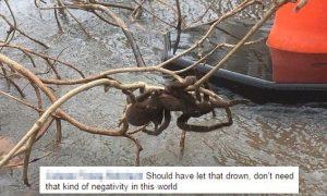 Mega tarantola sta per annegare, donna la salva: in Australia sono una specie protetta