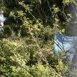 Roma, corpo di donna carbonizzato nel Parco delle Tre Fontane02