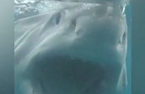 Uno squalo lo attaccò, e adesso lui fa...