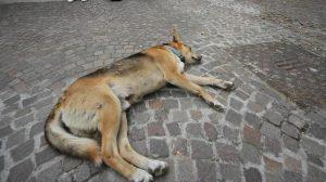 castelfranco-di-sotto-strage-cani